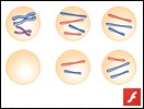 Mistakes in Meiosis